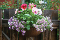 Perk Up  Your Pier: Container Gardening at the Lake