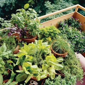 gardening2c