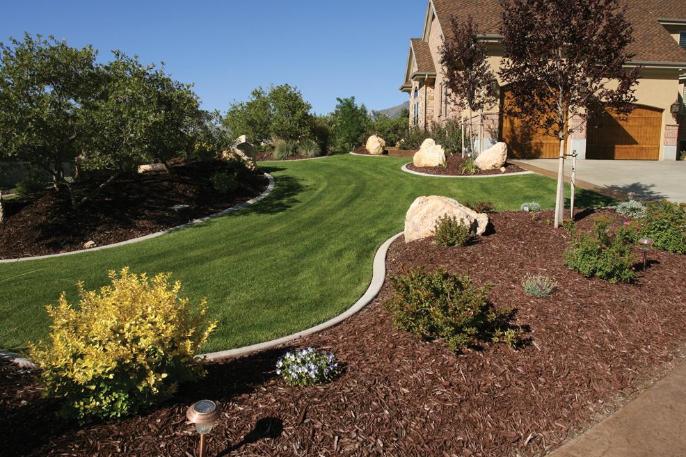 Less grass more fun for Colorado landscape design