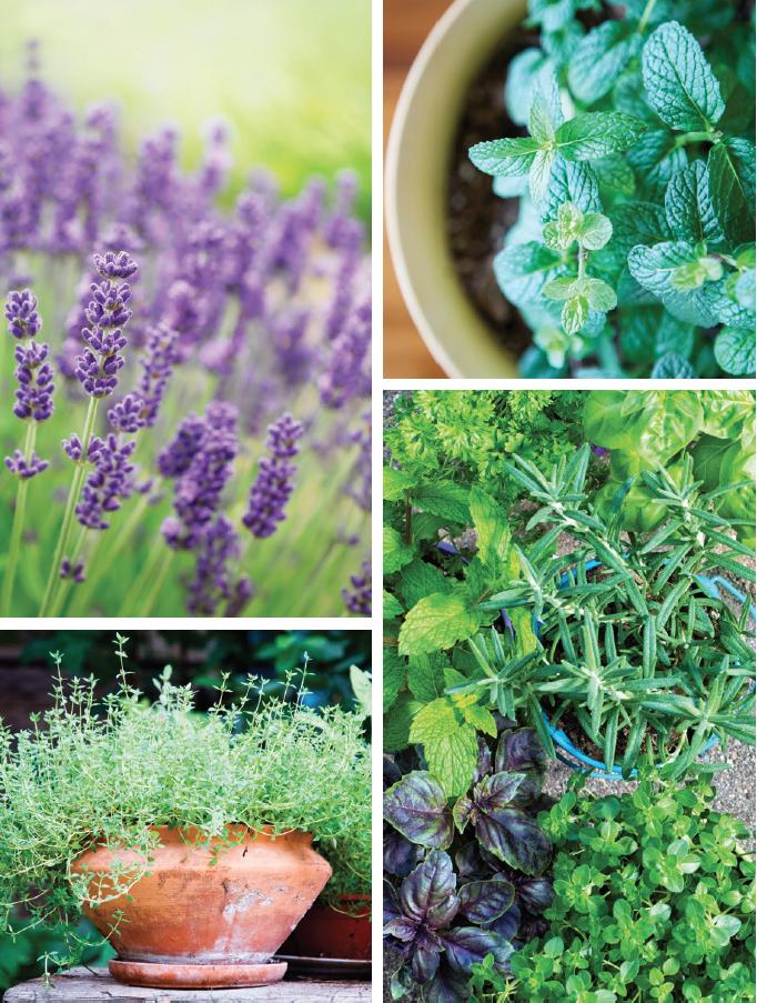 summer-herbs