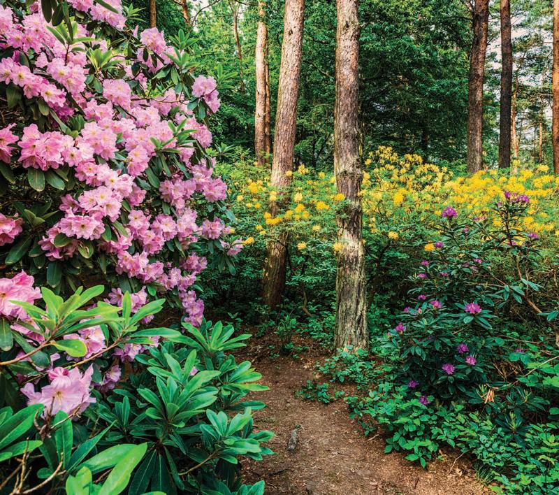 Garden_SML2018_ThreeSeason-1