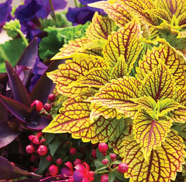 Garden_Annuals1