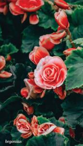 Garden_Annuals2a