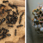Keeping Bugs at Bay | Natural Remedies to Combat Common Pests