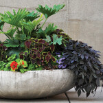 Cool Containers |Gardening in Pots of All Sizes for Flowers and More