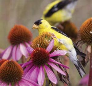 GARDEN_birdbees4
