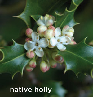 GARDEN_nativeshrubs7